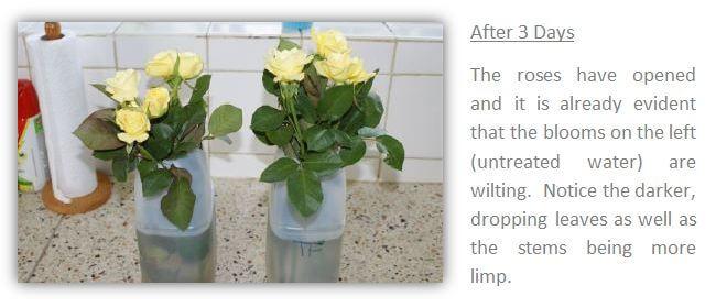 roses-3.1